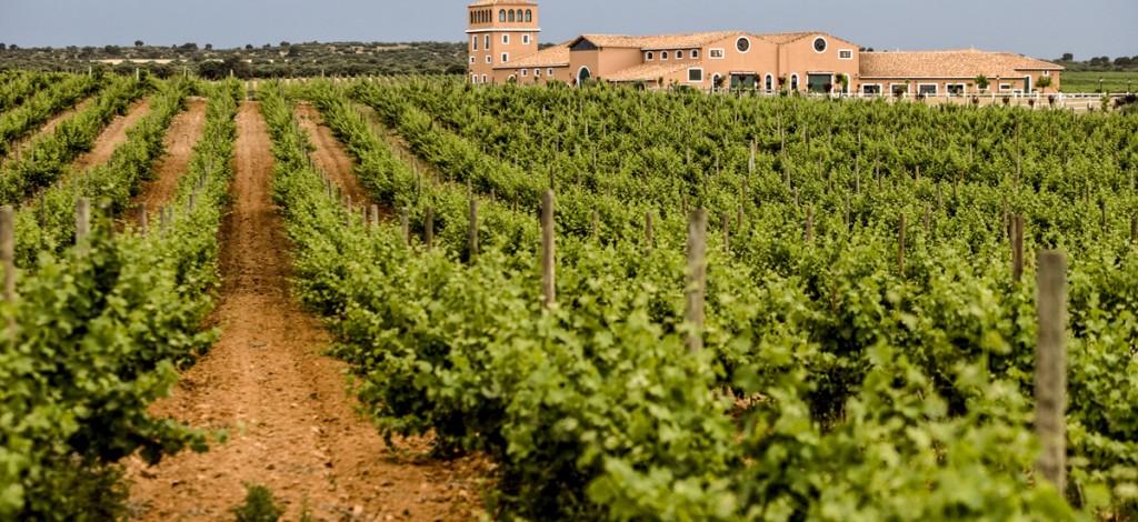 Vilñedos y bodega situada en Chinchilla de Montearagón, Albacete Foto: orgulloWine.