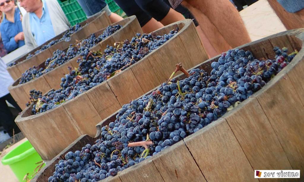 Preparativos pisada de uva en Villena, Alicante.