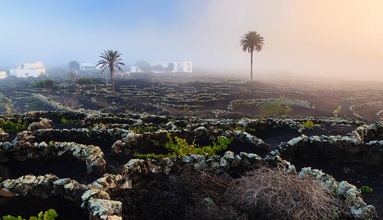 Bodega La Geria. Lanzarote