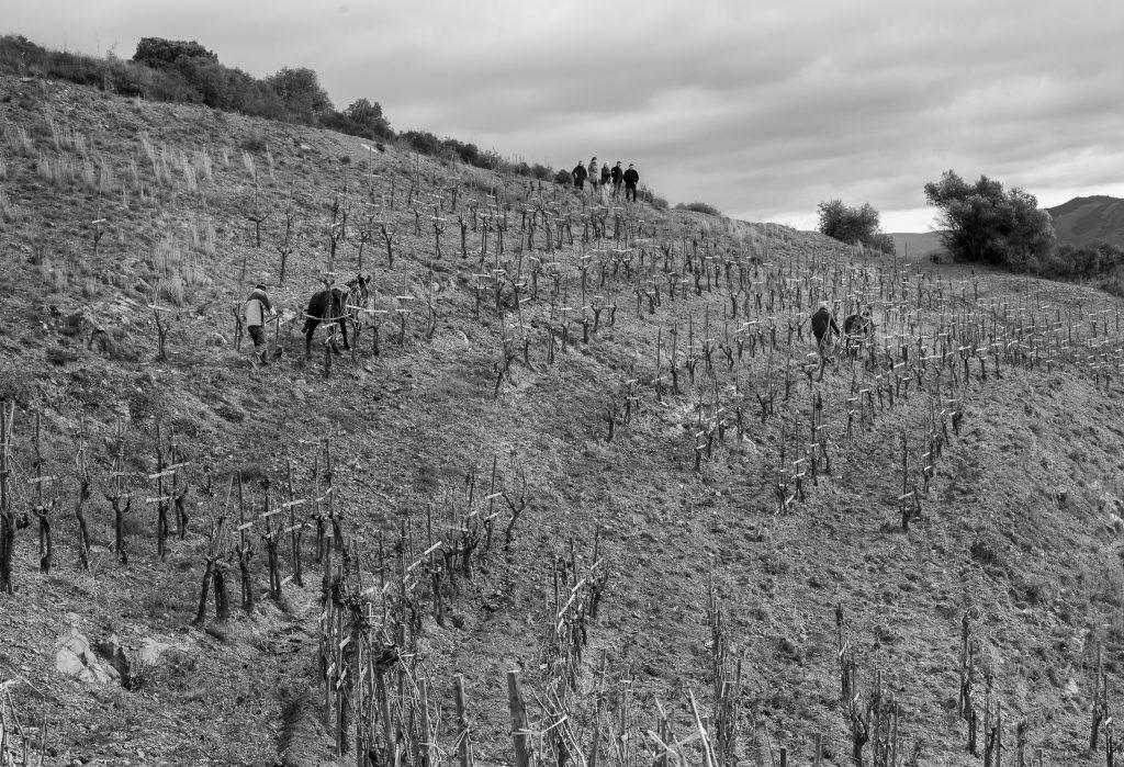 'Tras las viñas. Un viaje al alma de los vinos'. Josep Roca e Imma Puig. Fotografías: Josep Oliva.